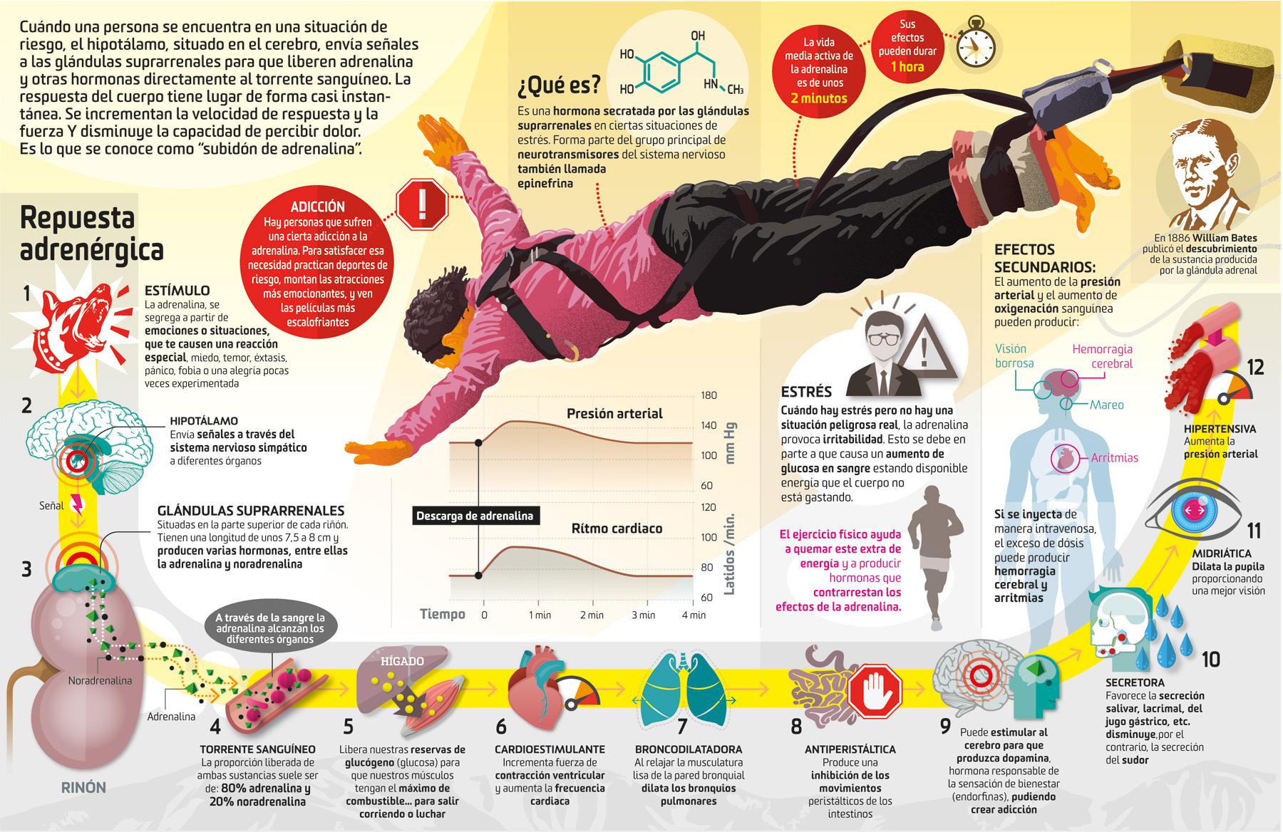 Adrenalina: analizamos cómo funciona