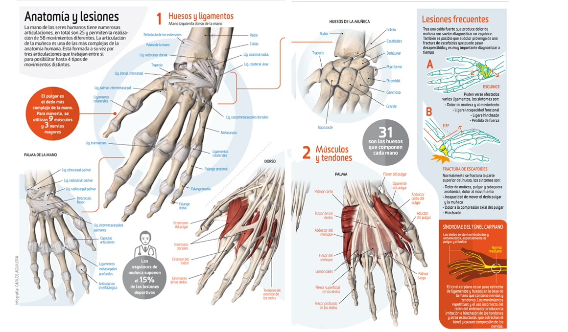 Así funciona... la mano | Salud | Sportlife