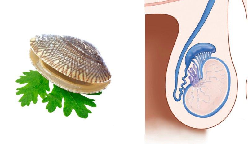 Alimentos que se parecen a partes del cuerpo sportlife - Alimentos que contienen silicio ...