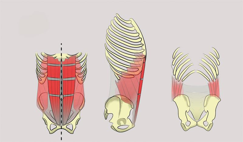 Por qué es necesario entrenar nuestro abdomen? | Fitness | Sportlife