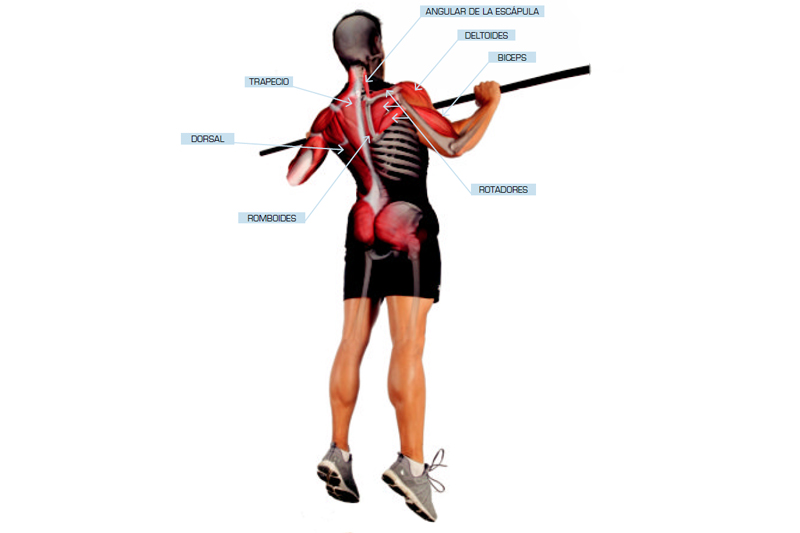 Anatomía humana - Pedro Chourio - Entrenador y preparador físico