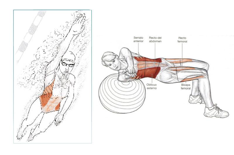 Anatomía del nadador   Natación   Sportlife