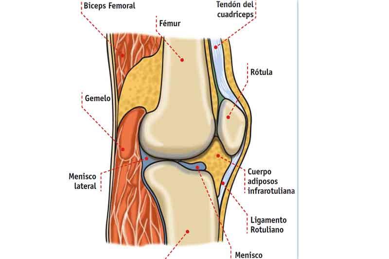Lesiones De Rodilla Aprende A Fortalecer Salud Sportlife